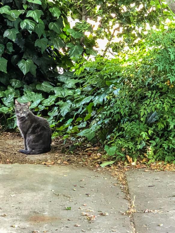 Cat_Visitor.jpg